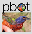 Painted Bunting Observer Team
